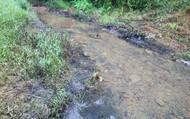 Cận cảnh vết dầu đen tại nguồn cấp nước cho nhà máy nước sông Đà