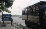 Vì sao dịch tả lợn Châu Phi bùng phát ở Quảng Nam?
