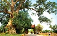 Làng cổ Đường Lâm được công nhận điểm du lịch của Hà Nội