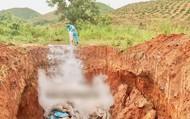 Kon Tum: Dịch tả lợn Châu Phi bùng phát trở lại khiến người dân lo lắng