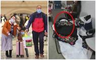 """Bệnh viện Vũ Hán thất thủ ngày Tết: Khung cảnh như """"ngày tận thế"""", người dân quỳ gối xin được chữa trị và những thi thể bị bỏ lại"""