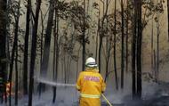 """Hơn 1 tỷ động vật chết cháy hé lộ kỷ lục thế giới buồn về giống loài """"tuyệt chủng"""" ở Australia"""