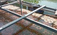 Đồng Tháp: Dư âm sau vụ cá chết hàng loạt