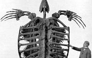 Phát hiện hóa thạch loài rùa khổng lồ ở Nam Mỹ, to bằng chiếc ô tô