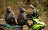 Chùm ảnh hài hước về cuộc sống muôn màu của động vật hoang dã