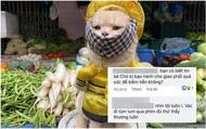 Đảo Mèo - group có đến hơn 2 triệu thành viên nổi tiếng nhất nhì MXH về thú cưng bất ngờ biến mất, xôn xao tin dàn admin bị tố bóc lột thú cưng, lừa đảo quyên góp?
