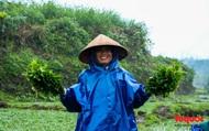 """Nông dân đội rét thu hoạch """"rau siêu sạch"""" trồng trên giếng cổ"""