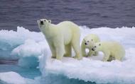 Sau khủng hoảng năng lượng, Bắc Cực có thể là điểm nóng tiếp theo của Nga và EU