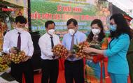 Bắc Giang: Xuất khẩu 15 tấn vải thiều an toàn sang thị trường Nhật Bản