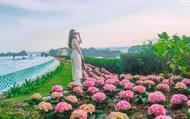 """Cận cảnh """"thiên đường hoa"""" trên đồi cao Hạ Long làm du khách mê mẩn"""
