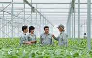 Thành lập BCĐ tổng kết 20 năm đổi mới, phát triển kinh tế tập thể