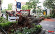 Hà Nội: Cây cổ thụ đổ ngang đường giữa ngày nắng nóng