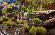 Quán cà phê độc lạ ở Tuyên Quang có cây mít trĩu quả mọc giữa nhà