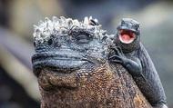 Quần đảo Galapagos: Thế giới thời tiền sử ở Thái Bình Dương!