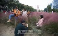 Du khách Trung Quốc selfie phá hỏng bãi cỏ hồng quý hiếm