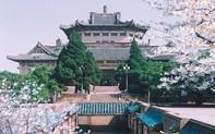 """Mê mệt với vẻ đẹp tựa tranh vẽ của ngôi trường được mệnh danh là """"Đại học hoa anh đào"""" ở Trung Quốc"""