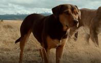 Đường về nhà của cún con: Câu chuyện cảm động về hành trình tìm lại chủ sau khi bị thất lạc
