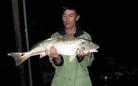 Ngư dân bắt được cá lạ nặng 5kg nghi cá sủ vàng quý hiếm