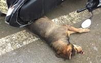 """Chó """"điên"""" gây náo loạn khu chợ, hàng chục người bị cắn"""