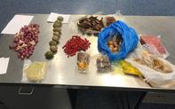 Du khách Việt bị cấm nhập cảnh 3 năm vì mang theo thịt lợn vào Australia