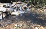 Vụ ô nhiễm nguồn nước sông Đà: Styren trong nước có thể gây ung thư cho con người