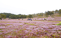 """Khám phá """"thiên đường cỏ hoa"""" lãng mạn trên cao nguyên Lang Biang"""