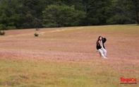 """Đồi cỏ hồng ở Đà Lạt đẹp như tranh khiến khách du lịch """"mê mẩn"""""""