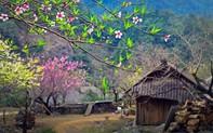 Đi đâu thì đi nhưng đừng quên Tây Bắc mùa xuân, hoa đang gọi