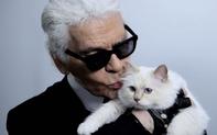 """""""Tranh cãi"""" người hay mèo thừa kế tài sản trăm triệu USD của nhà thiết kế Chanel"""