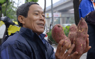 """Người dân Thủ đô đội mưa """"giải cứu"""" hàng trăm tấn khoai lang cho nông dân Gia Lai"""
