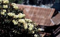Nhiều hoạt động hấp dẫn tại Lễ hội hoa đỗ quyên lần thứ 3