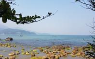 Quản lý rạn Nam Ô như thế nào để vừa phát triển du lịch, vừa không ô nhiễm, mất an ninh trật tự