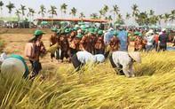 Tôn vinh nghề trồng lúa nước qua Lễ hội ngày mùa năm 2019