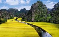 Sắc vàng Tam Cốc - Tràng An