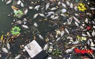 Cá Hồ Tây tiếp tục chết nổi trắng hồ, bốc mùi hôi thối