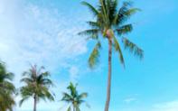 Cảnh sắc mùa hè rộng ràng tại Premier Residences Phu Quoc Emerald Bay