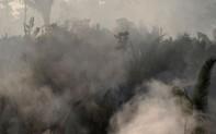 """Hiệp định thương mại tự do EU, Nam Mỹ """"lâm nguy"""" vì cháy rừng Amazon"""