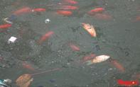 Hà Nội: Nước hồ Văn Quán chuyển màu đen kịt, nổi váng, cá chết bốc mùi hôi thối sau ngày tiễn ông Táo về trời