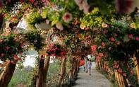 """Cùng """"chạm tay"""" vào thiên đường hoa muôn màu dịp Tết ngay gần Hà Nội"""