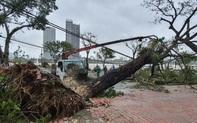 Hình ảnh Đà Nẵng sau bão số 9, nhiều cây xanh ngã đổ la liệt