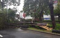 Bão số 9 đổ bộ đất liền, tâm bão vào Quảng Nam - Quảng Ngãi