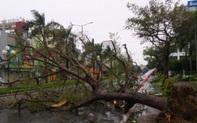 Các tỉnh Kon Tum, Gia Lai khẩn cấp cho học sinh nghỉ học phòng chống bão số 9