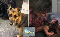 Chủ nhân bị lật thuyền, chó cưng bơi ròng rã 11 tiếng đồng hồ tìm kiếm sự trợ giúp