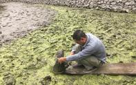 Khảo sát, nghiên cứu bãi cọc khu vực Đầm Thượng