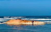 """Xác cá voi """"khủng"""" nặng khoảng 10 tấn dạt vào bờ biển Hà Tĩnh"""