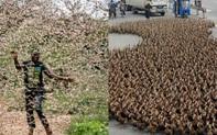 Đội quân 100 nghìn chú vịt diệt 400 tỷ con châu chấu của Trung Quốc có thể không được ra trận, phải chờ 2 tháng mới có quyết định chính thức