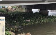 Phát hiện thi thể cô gái mặc đồ phật tử nổi trên sông Sài Gòn