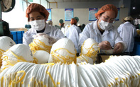 """Hà Lan """"nóng"""" vụ thu hồi 600 nghìn khẩu trang: Trung Quốc  phản ứng nhanh"""