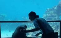 Nối gót chim cánh cụt, hải cẩu cũng làm 1 tour du ngoạn thủy cung cho đỡ buồn chán mùa Covid-19