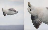 Vô tình lọt vào ống kính, chú chim hải âu bỗng nổi tiếng vì biết tận hưởng cuộc sống và hạnh phúc nhất thế giới